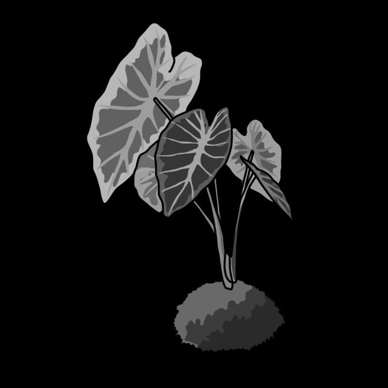 アロカシア苔玉モノクロ
