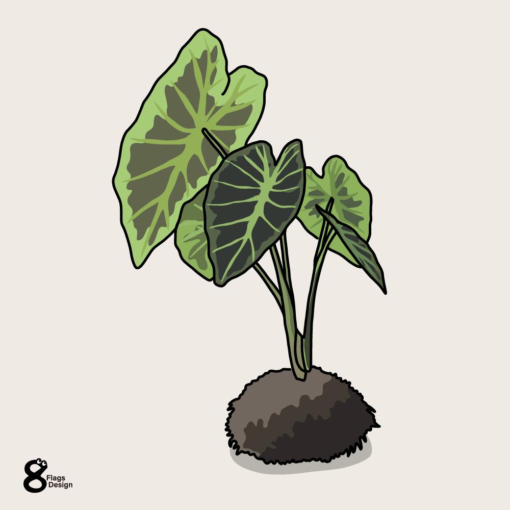 アロカシア苔玉のキャッチ画像