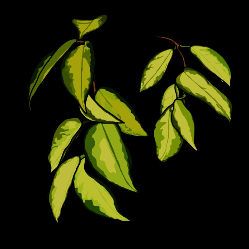 ポトスの葉っぱブラウン