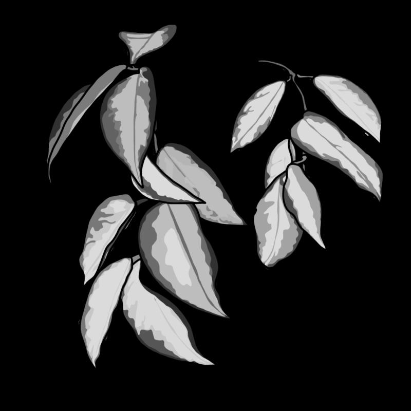 ポトスの葉っぱグレー