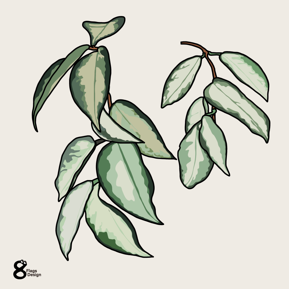 ポトスの葉っぱのキャッチ画像