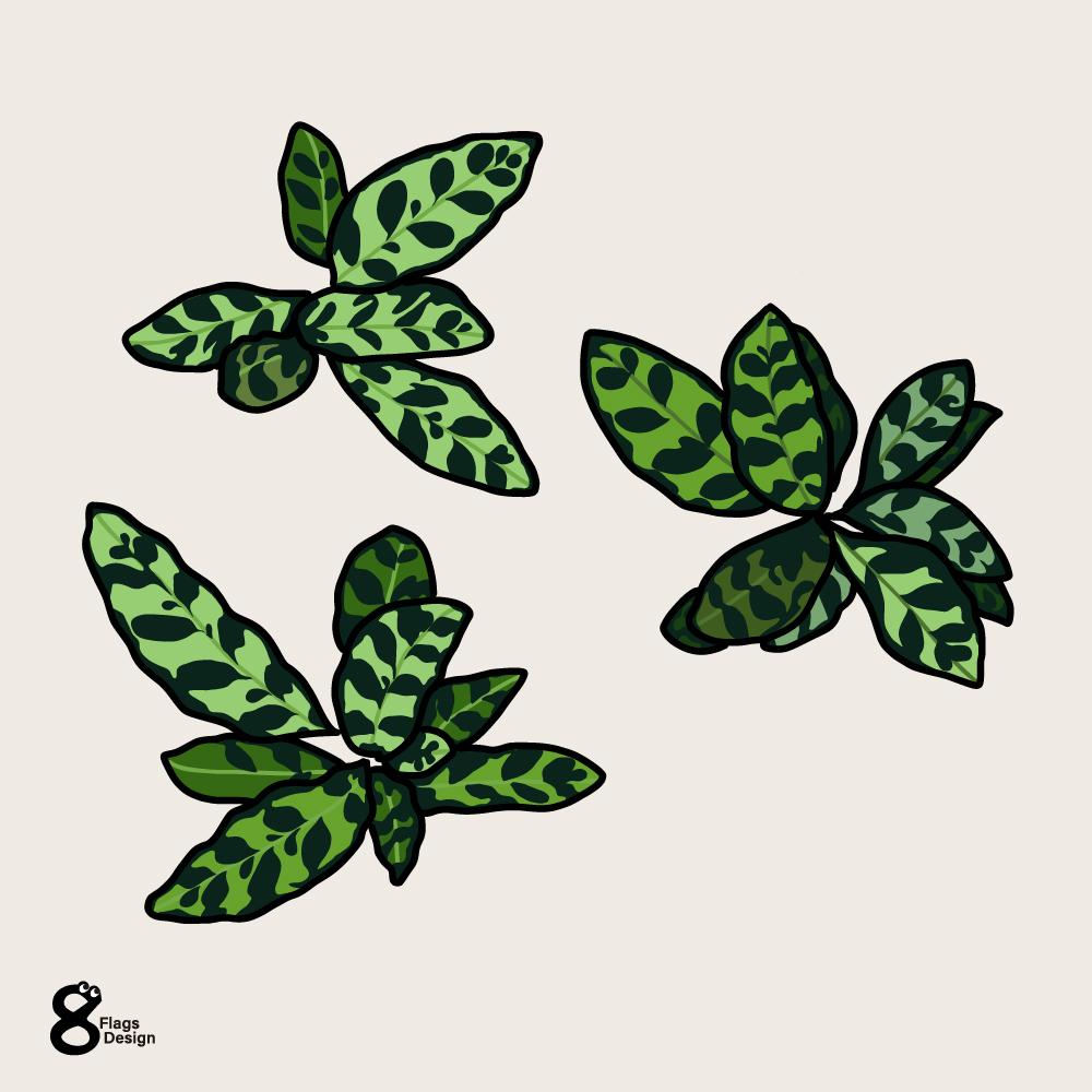 カラテア葉っぱセットのキャッチ画像