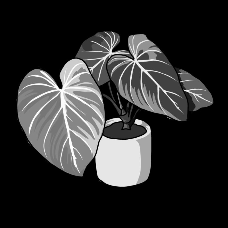 アロカシアの鉢モノクロ