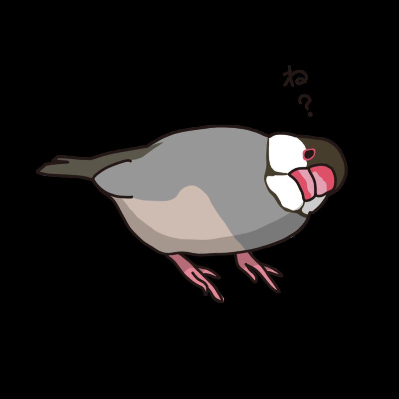 念押ししてくる文鳥桜