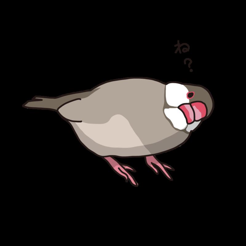 念押ししてくる文鳥シナモン
