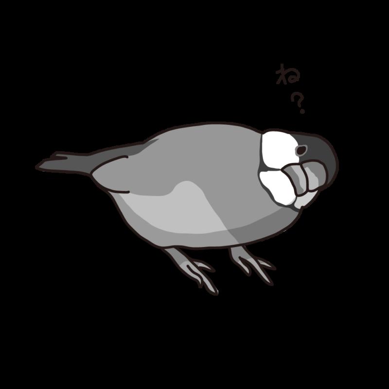 念押ししてくる文鳥モノクロ