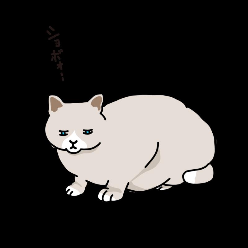 寝起きのネコクリーム
