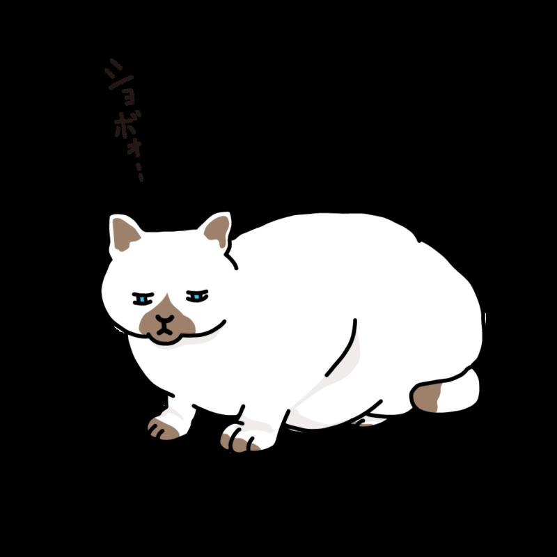 寝起きのネコホワイト