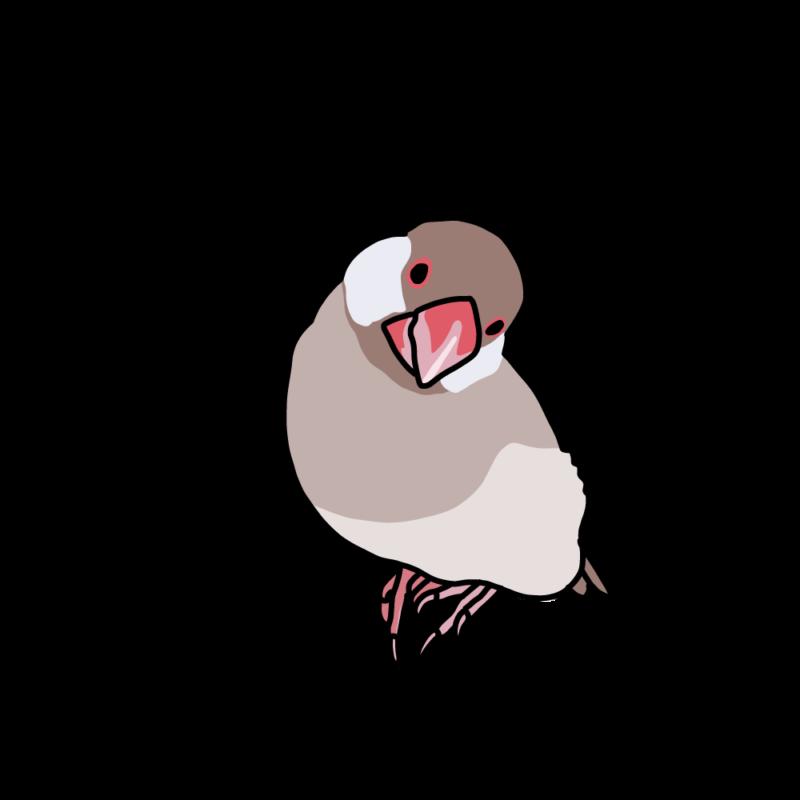 ぶりっ子文鳥シナモン