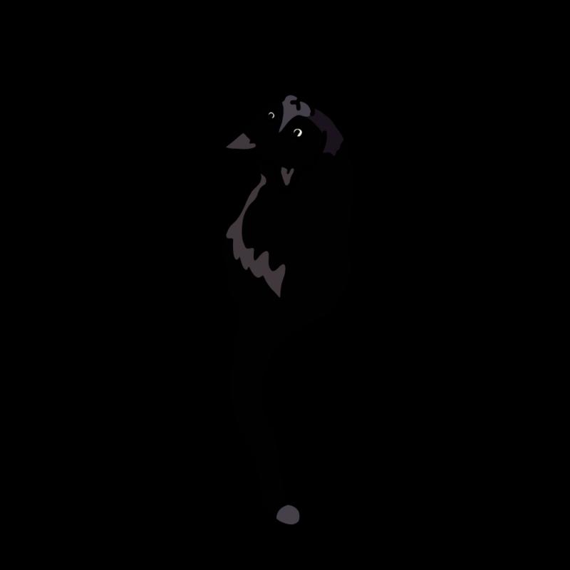 見上げるネコブラック