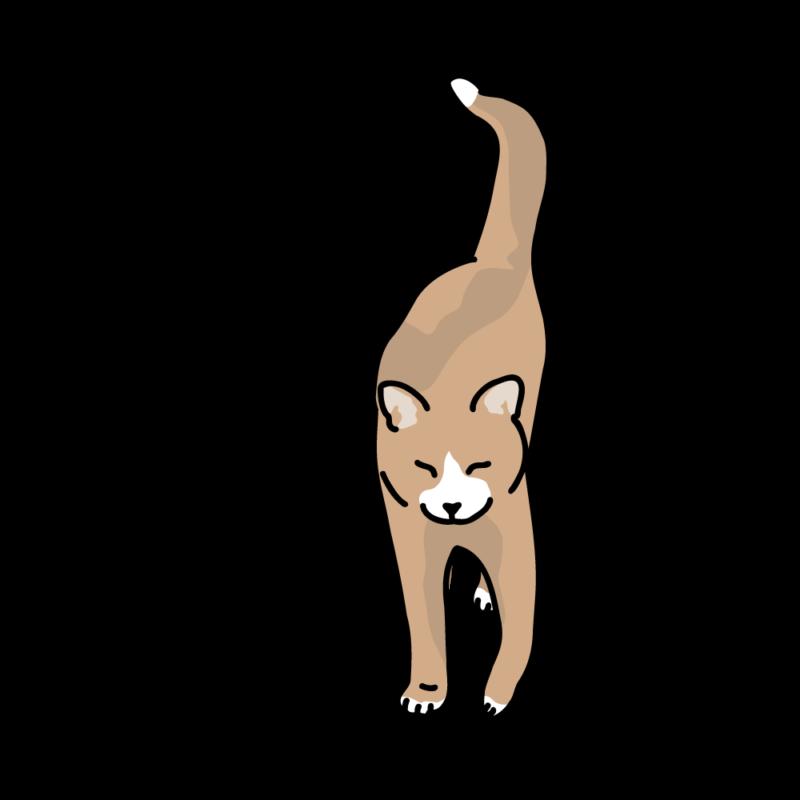 さんぽ帰りのネコアンバー