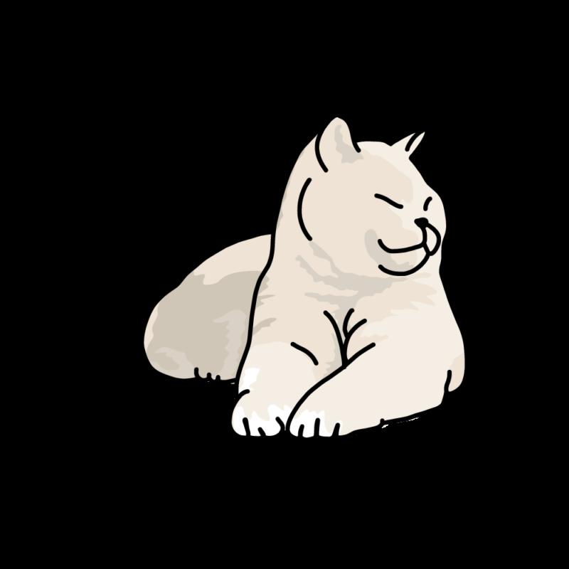 日向ぼっこのネコ白