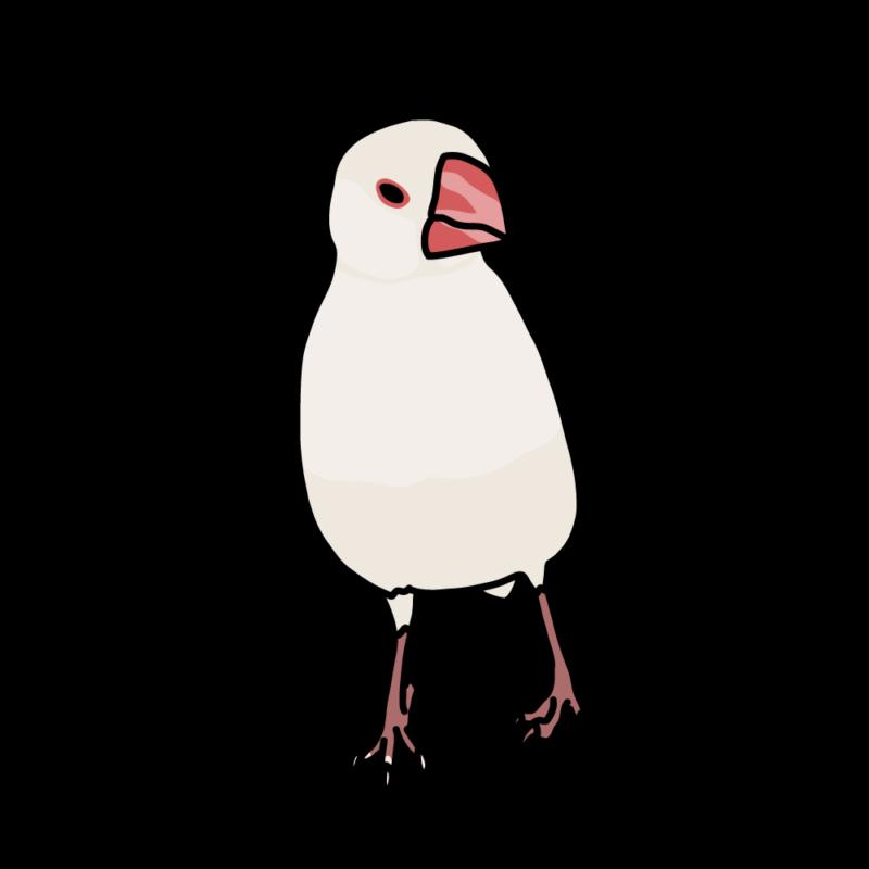 やる気満々の文鳥さん(伸びてる)白