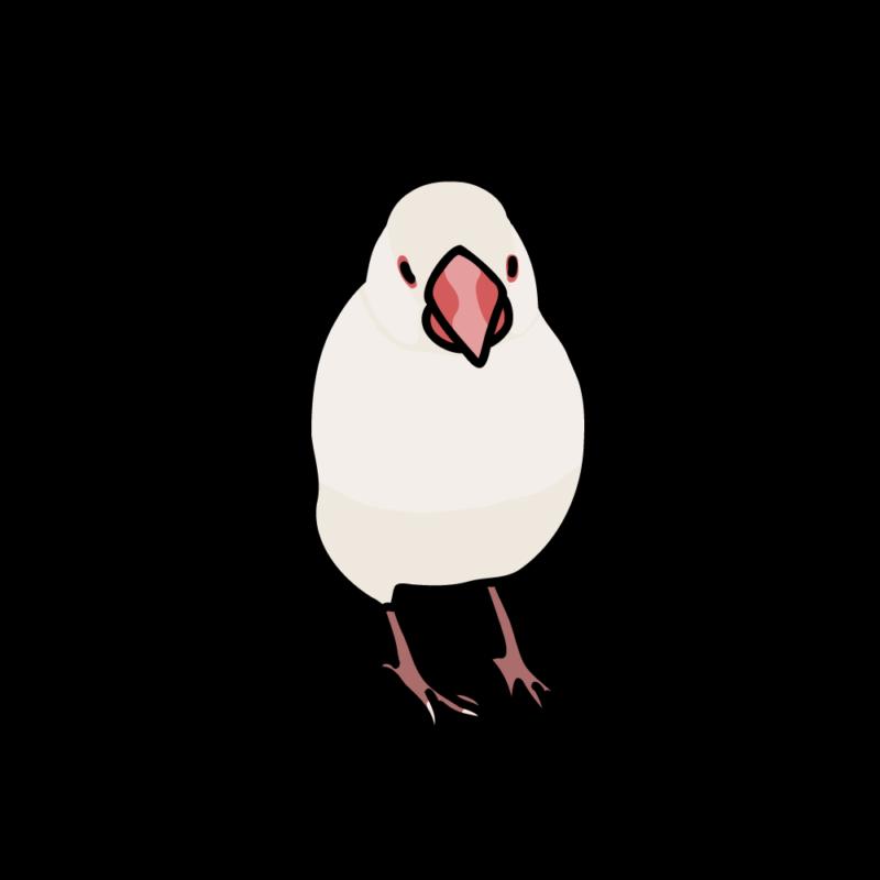 小悪魔な文鳥白