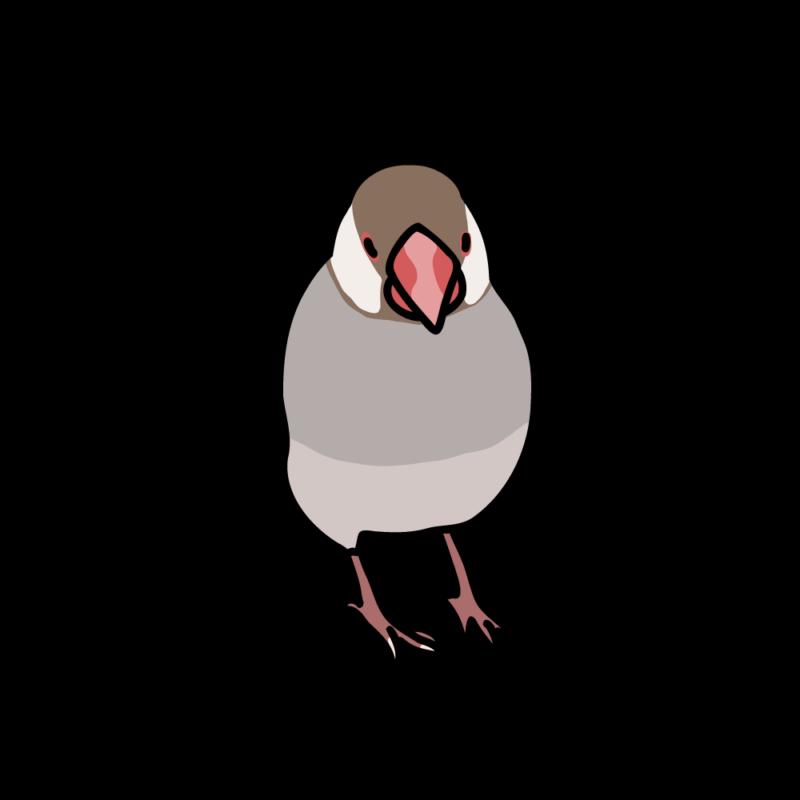 小悪魔な文鳥シナモン