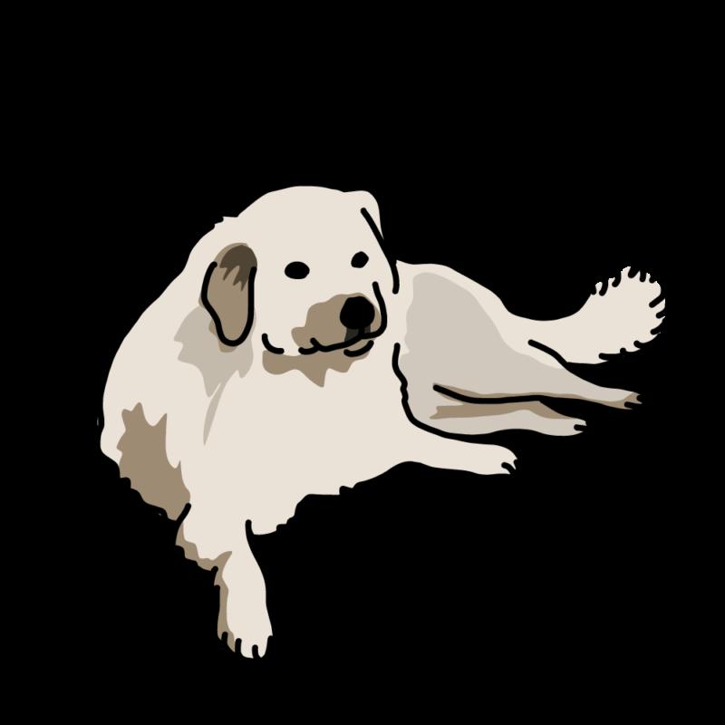 貫禄の大型犬(ラブラドール)ノーマル