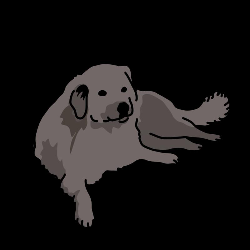 貫禄の大型犬(ラブラドール)黒