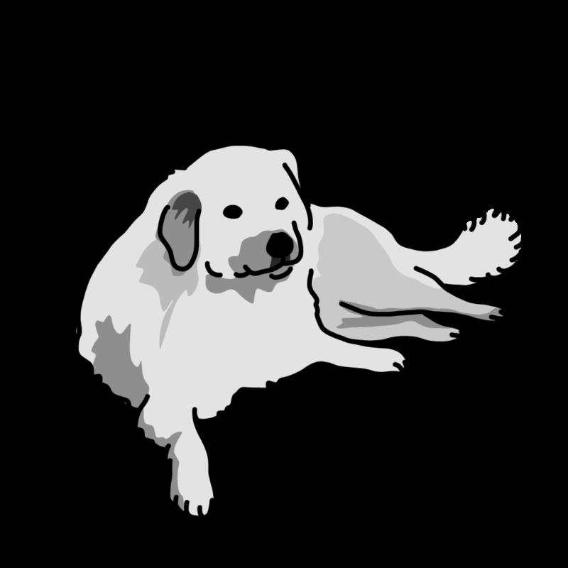 貫禄の大型犬(ラブラドール)モノクロ
