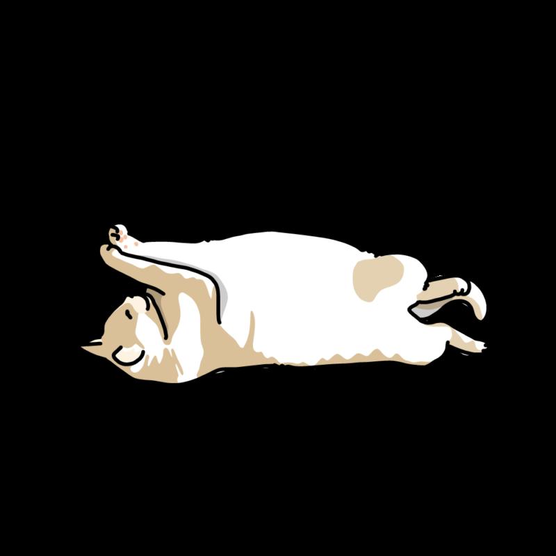 ヘソ天で寝るネコブチ