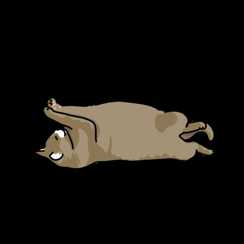 ヘソ天で寝るネコ茶