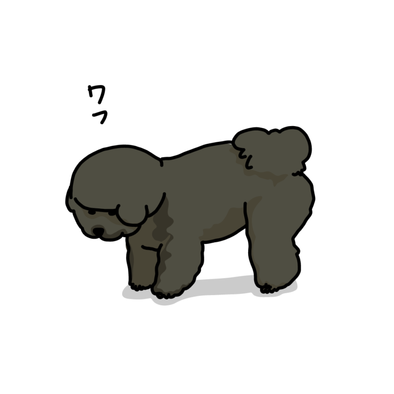 何か見つけた犬(ビションフリーゼ)黒