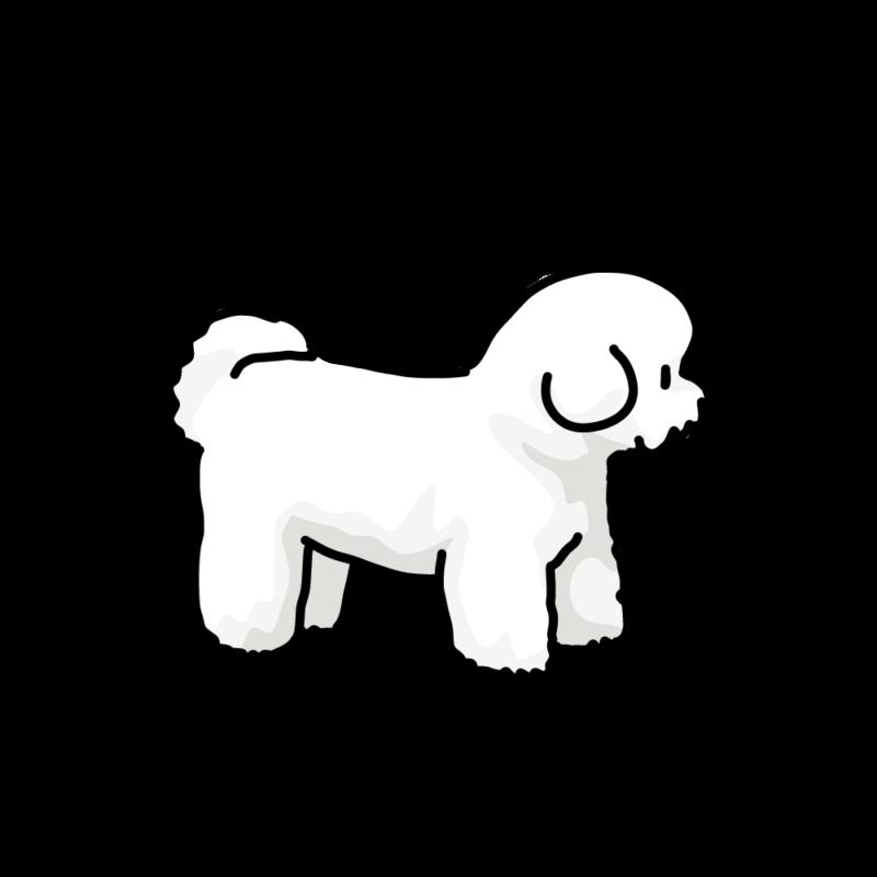 綿犬(ビションフリーゼ)ホワイト