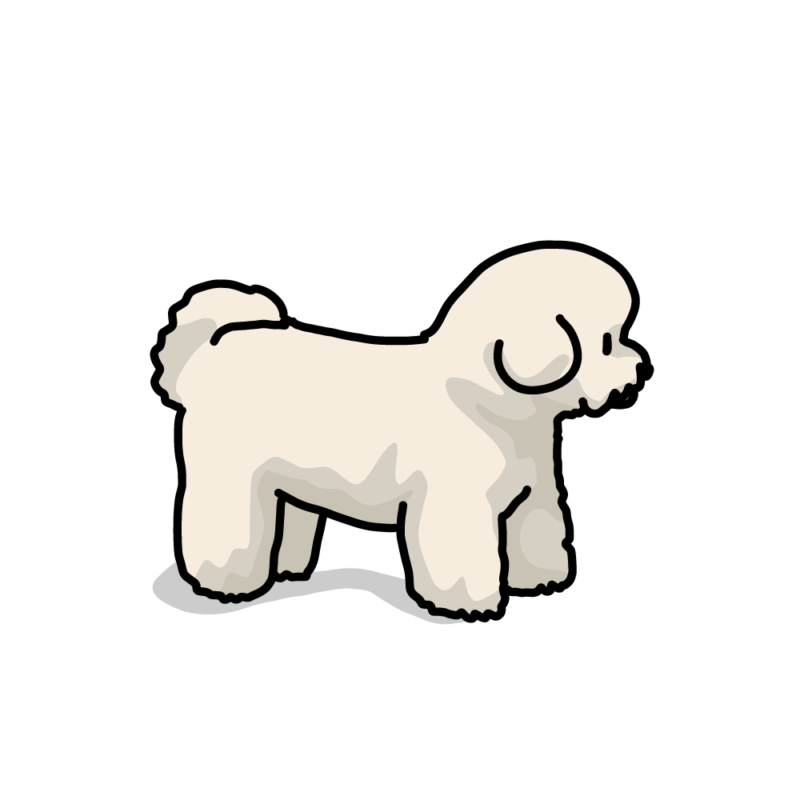 綿犬(ビションフリーゼ)クリーム