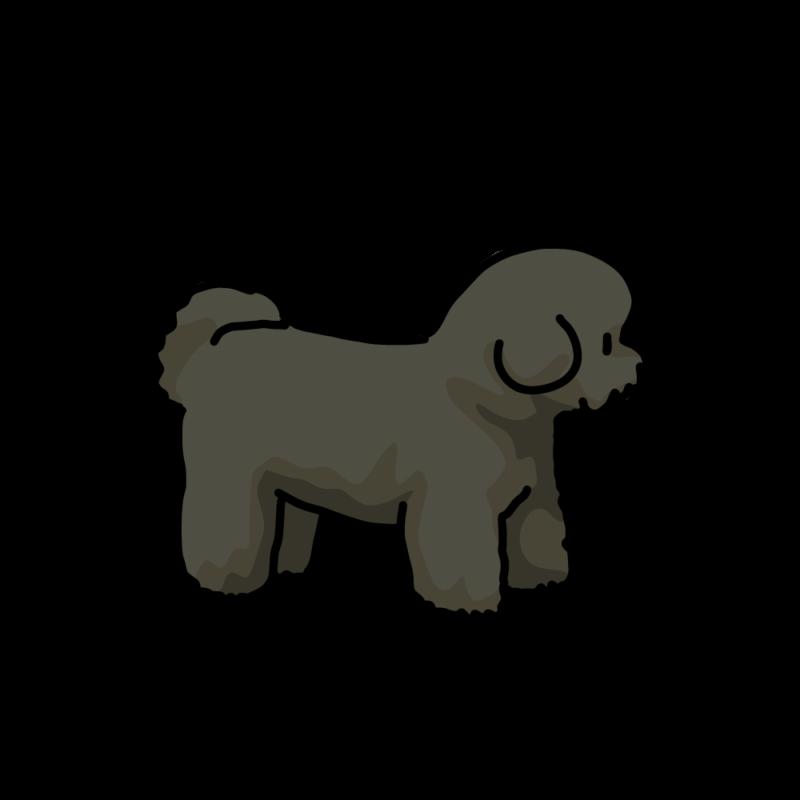 綿犬(ビションフリーゼ)ブラック