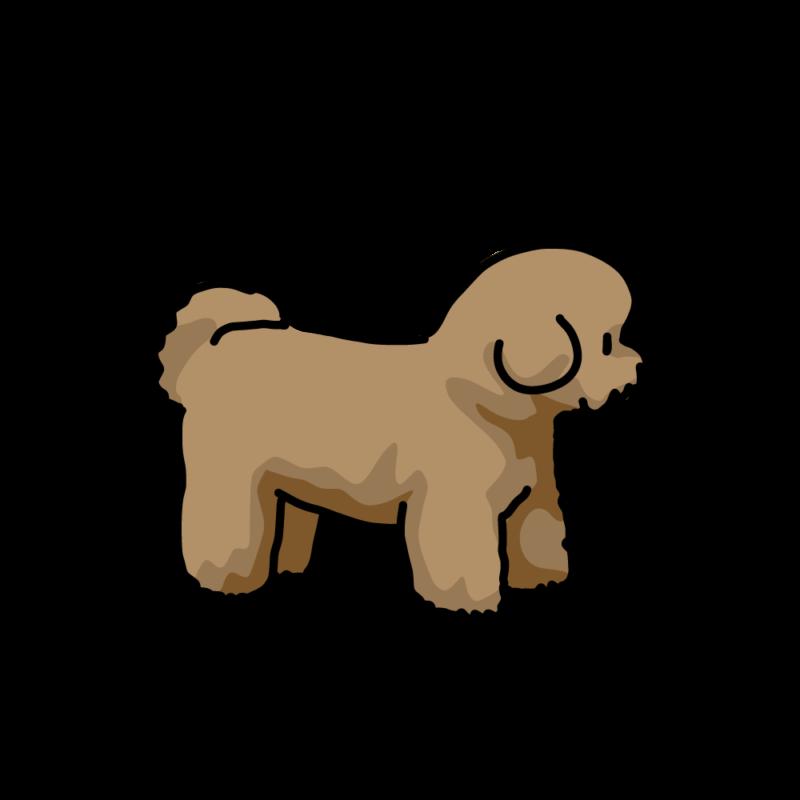綿犬(ビションフリーゼ)茶