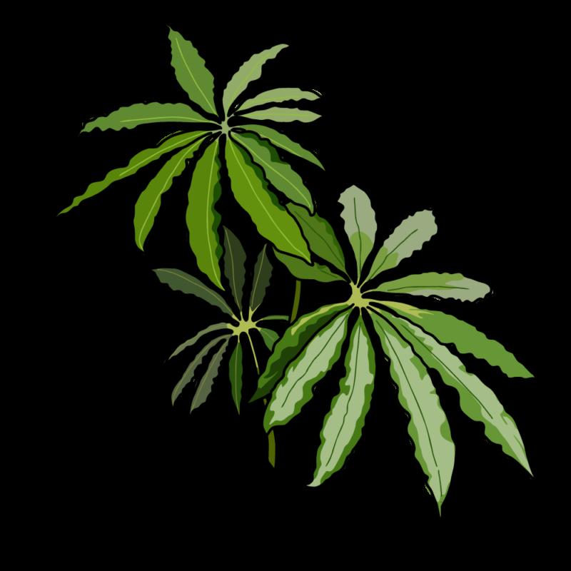 チュピタンサスの鉢グリーン