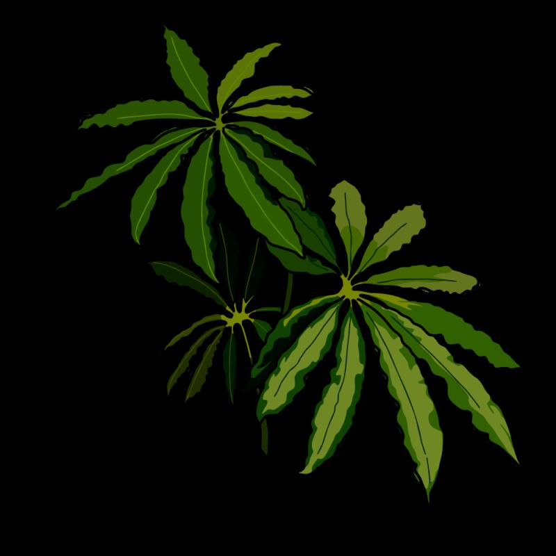 チュピタンサスの鉢濃いグリーン