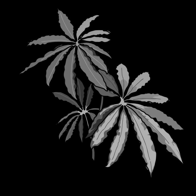チュピタンサスの鉢モノクロ