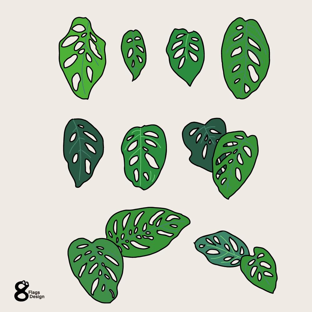マドカズラ葉っぱセットのキャッチ画像