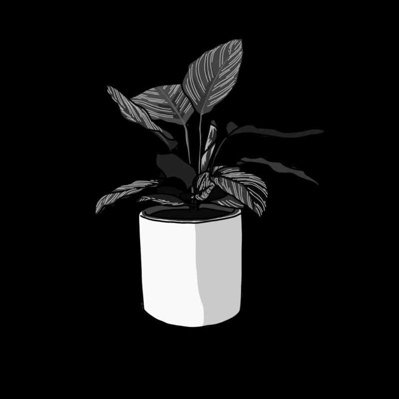 カラテアの鉢モノクロ