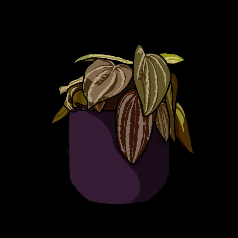 ペペロミアの鉢赤