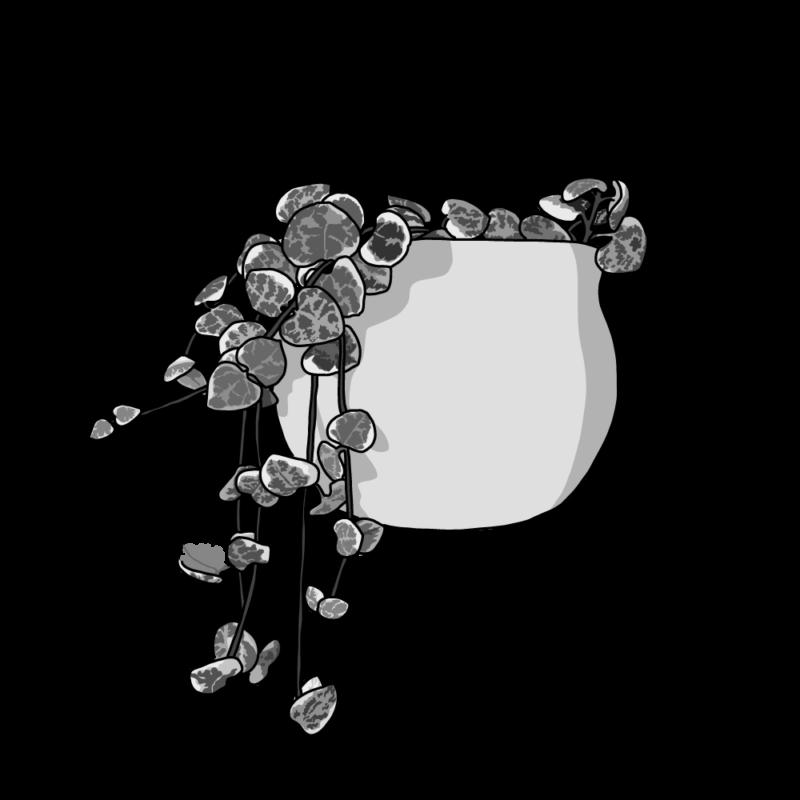 ハートカズラ(観葉植物)モノクロ