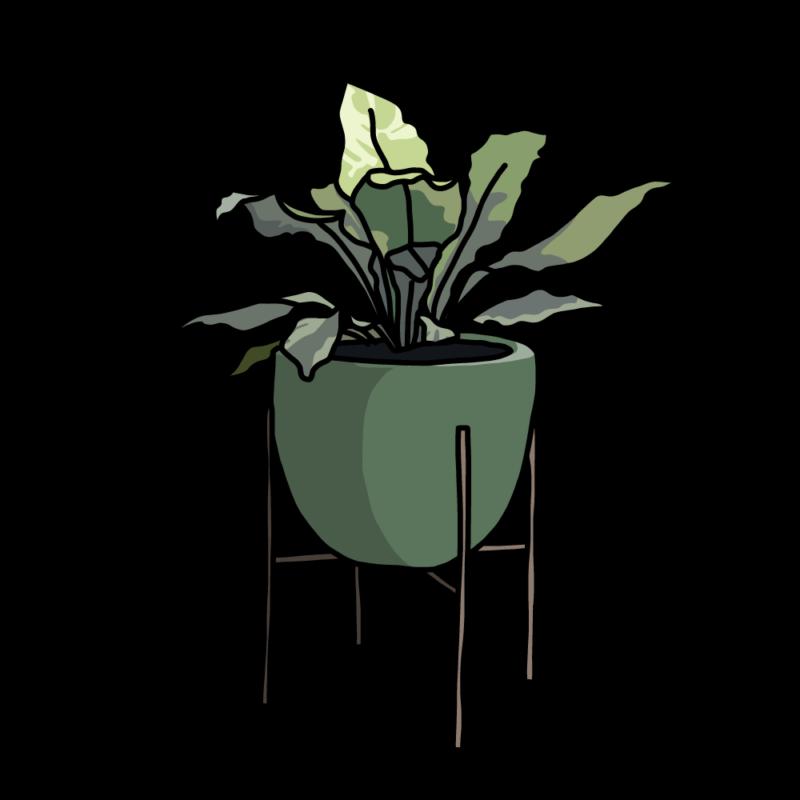 アスプレニウム(観葉植物)グリーン