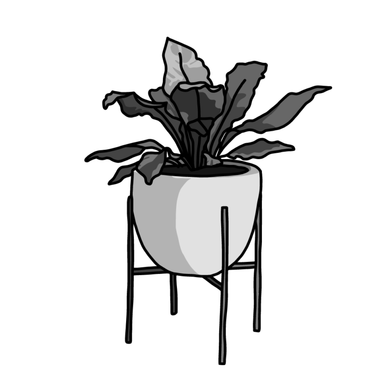 アスプレニウム(観葉植物)モノクロ