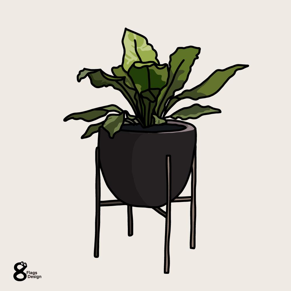 アスプレニウム(観葉植物)のキャッチ画像