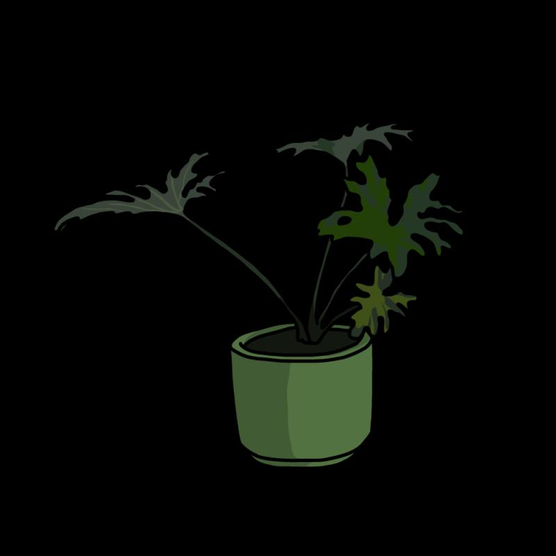 セローム(観葉植物)グリーン
