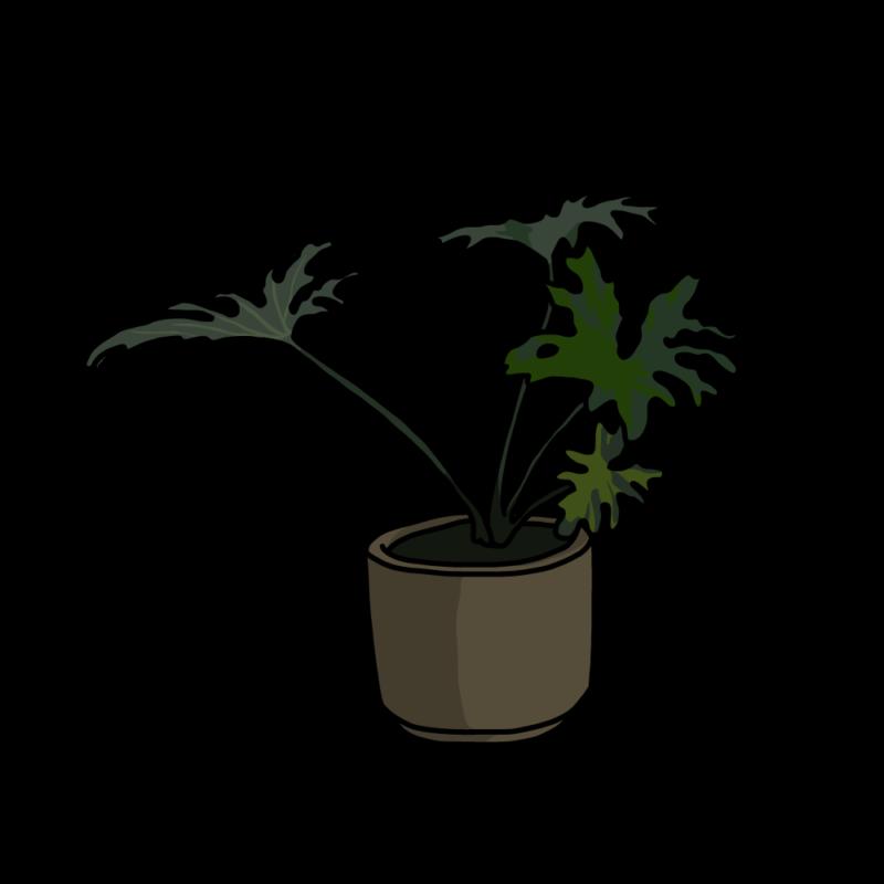 セローム(観葉植物)ブラウン