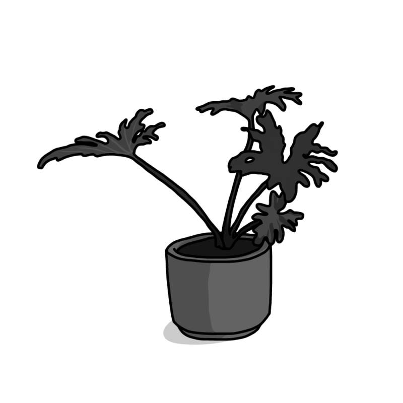 セローム(観葉植物)モノクロ