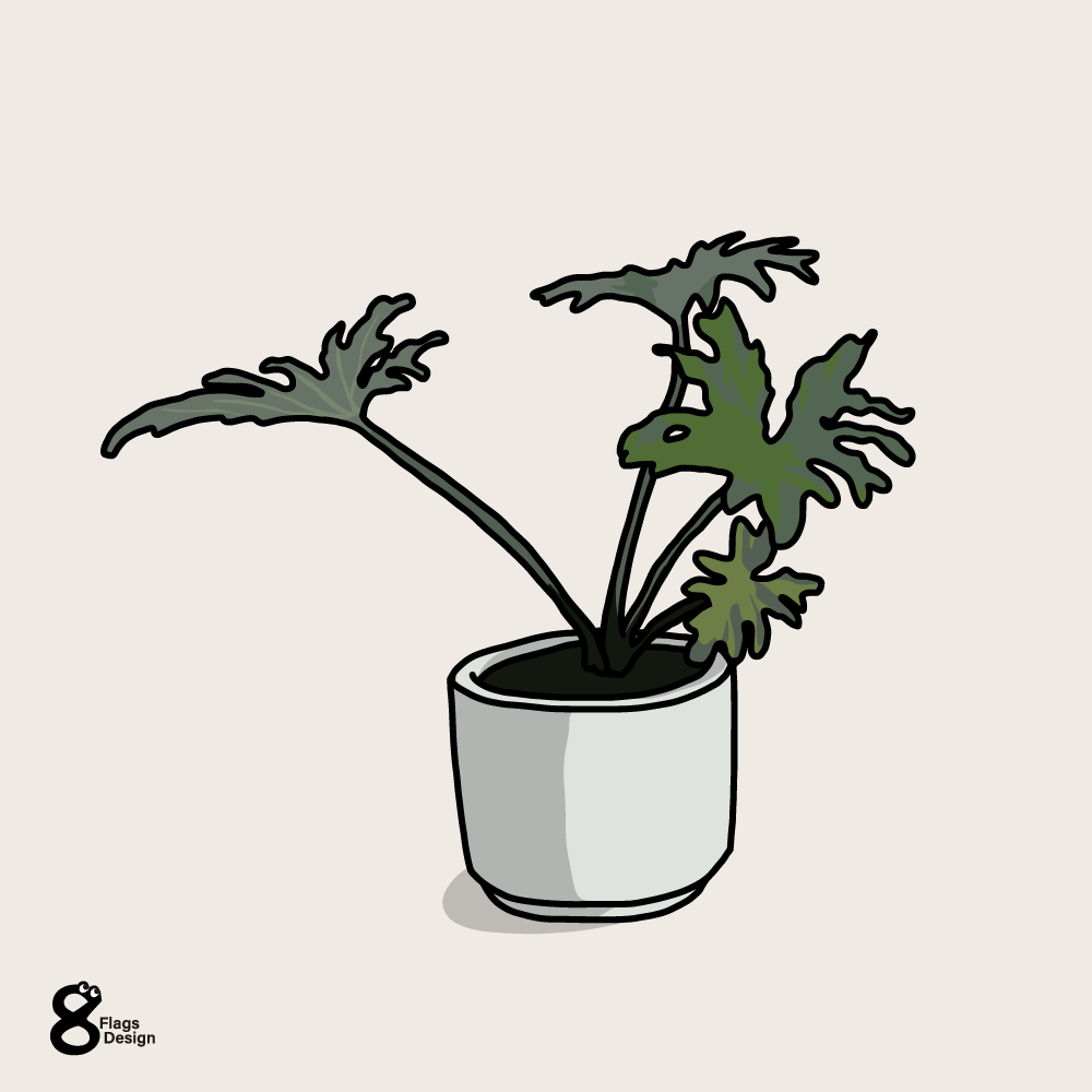 セローム(観葉植物)のキャッチ画像