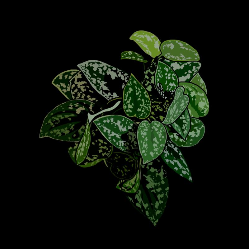 ディフェンバキア(葉っぱ)ビリジアン