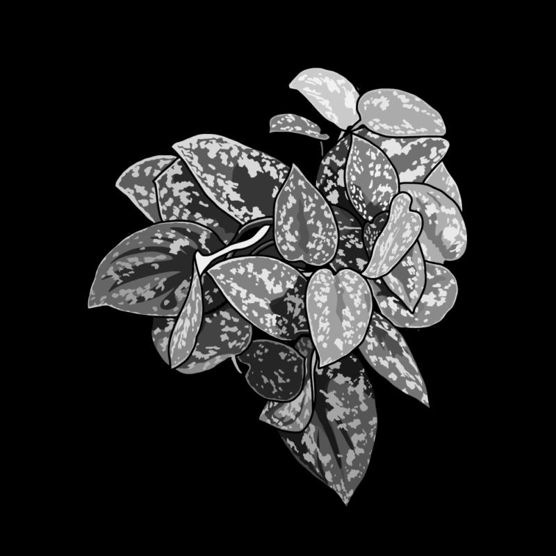 ディフェンバキア(葉っぱ)モノクロ
