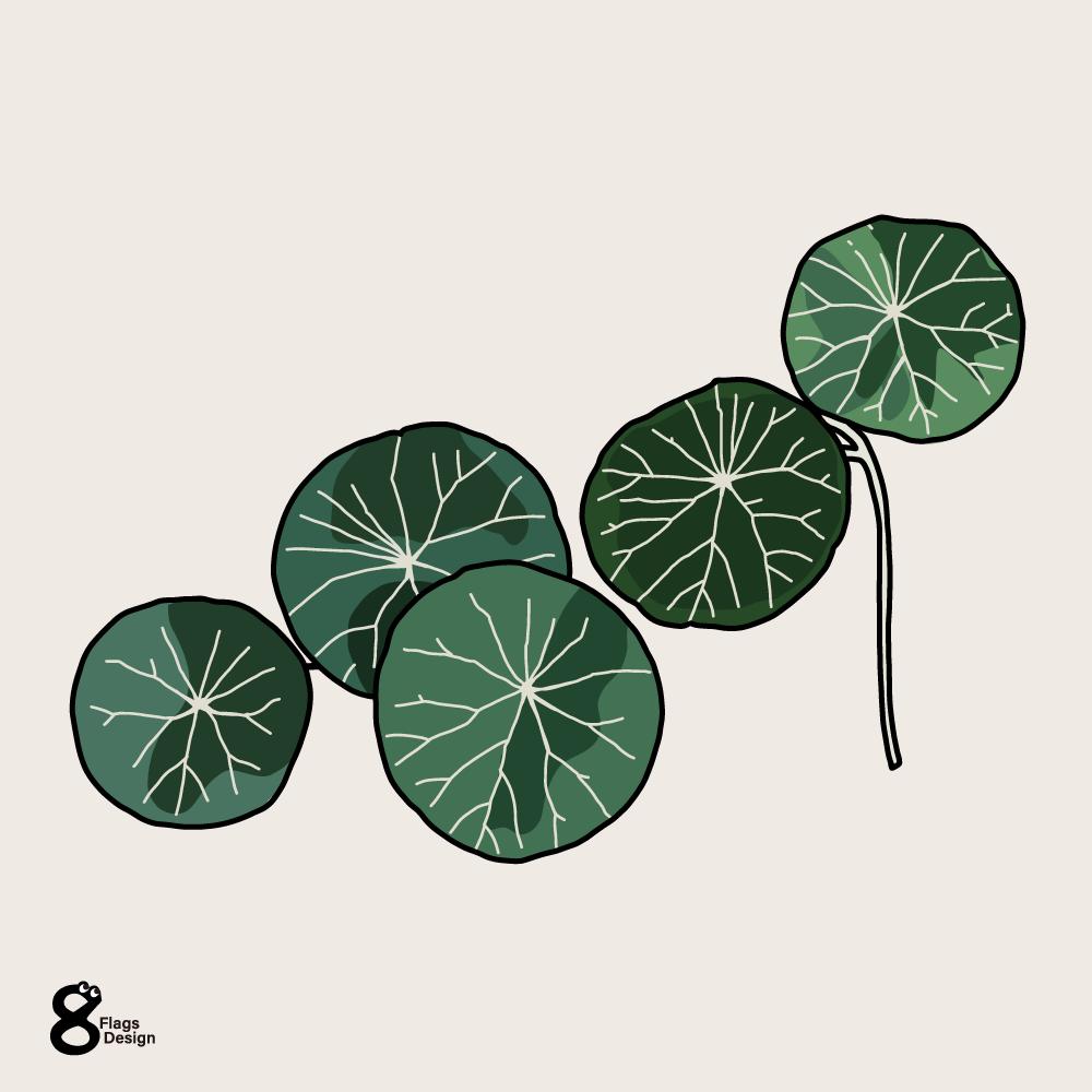 ピレア・ペペロミオイデス(観葉植物)のキャッチ画像