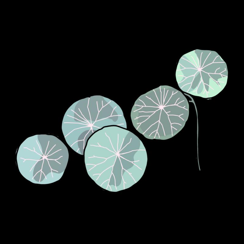 ピレア・ペペロミオイデス(観葉植物)エメラルド