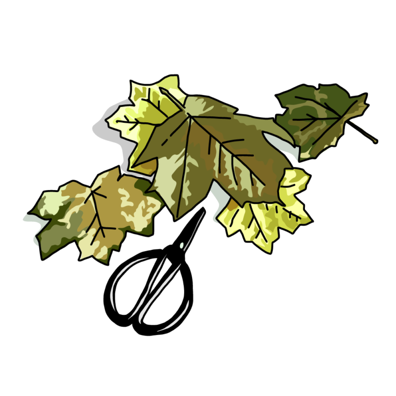 紅葉と裁ちバサミグリーン