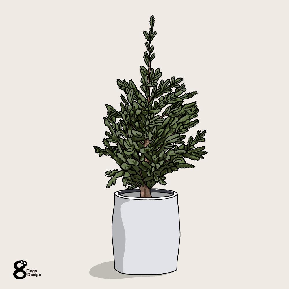 もみの木(生クリスマスツリー)のキャッチ画像