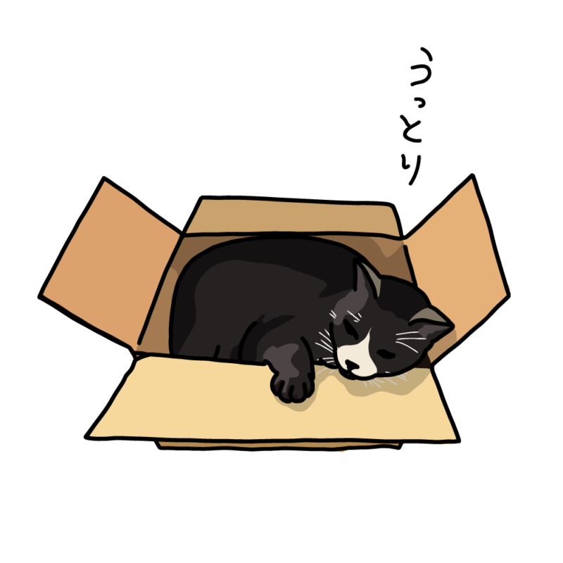 箱ネコハチワレ